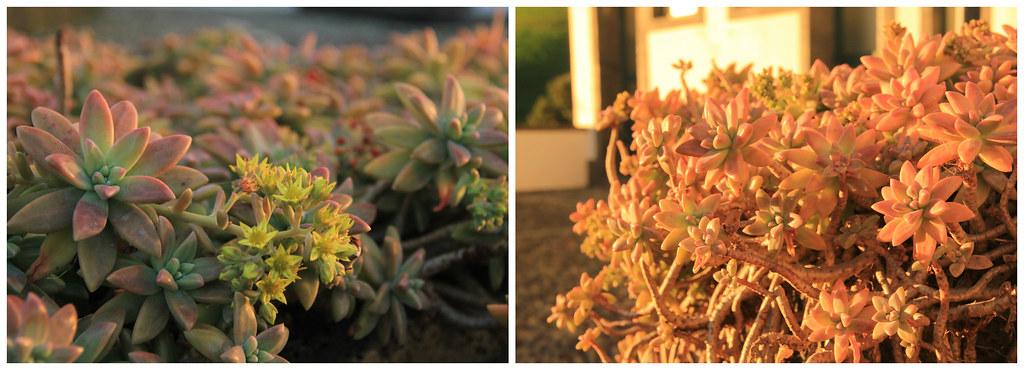 Succulents, Ermida Nossa Senhora Da Paz