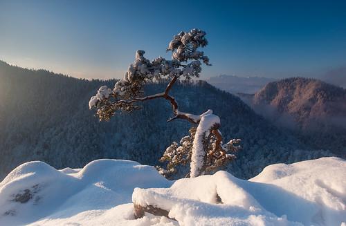 pieniny kingapieninska gory mountains mist morning mistymorning snow snieg tatry nikon nikond700 nikondslrcarlzeiss distagont3518 nikkond700users landscape pejzaz zima winetr