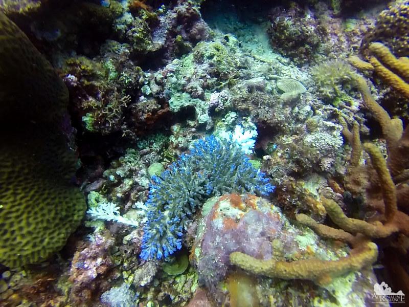 Coral flourescing