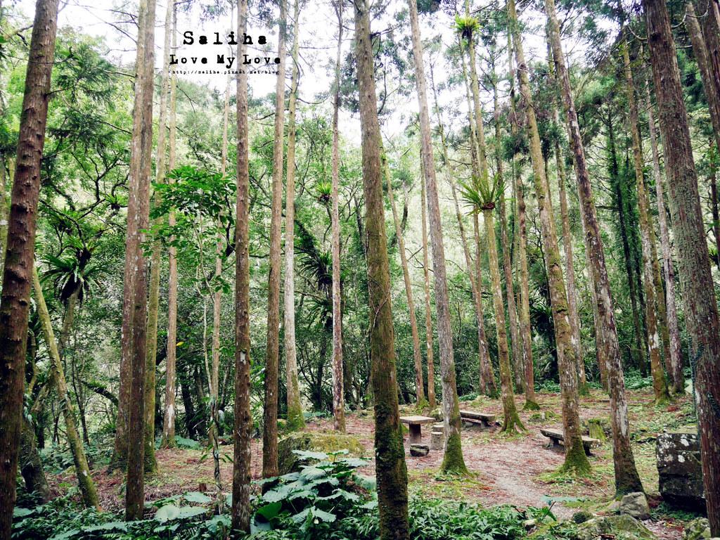 新北三峽一日遊踏青景點推薦滿月圓森林遊樂區 (24)