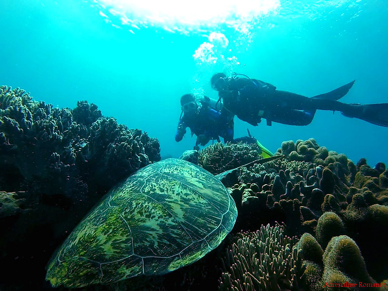 Huge green turtle!