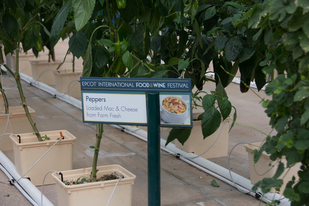 Peppers being grown at Living with the Land