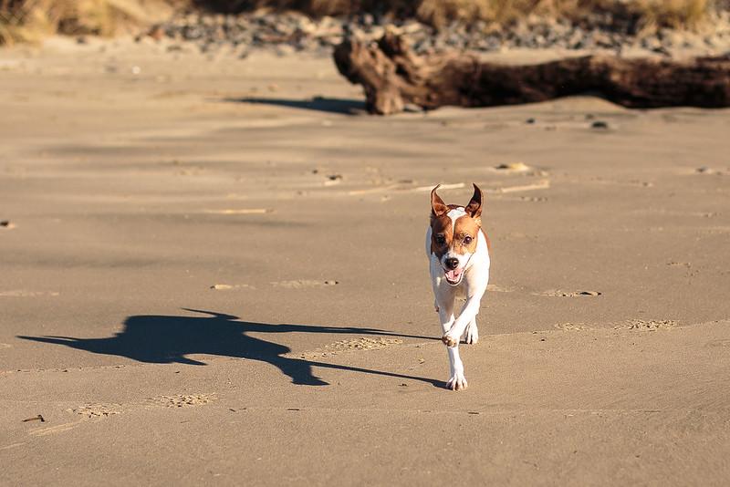 January Beach-7722