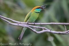 The green bee eater #bird #birds #birdsarebeautiful #natgeo #colourphotography #bill #beak #wings #savewildlife #feathers #aves
