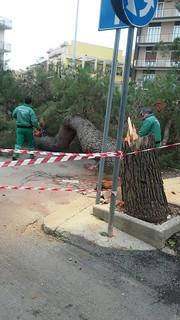 Le operazioni di taglio dell'albero (2)