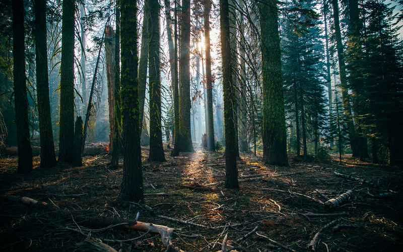 Des scientifiques ont découvert comment rendre le bois encore plus résistant que l'acier