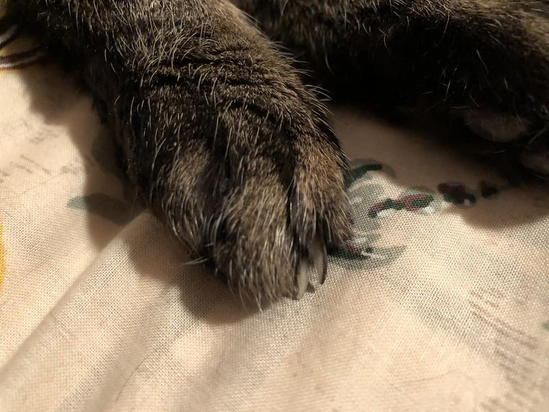 Tabby Claws