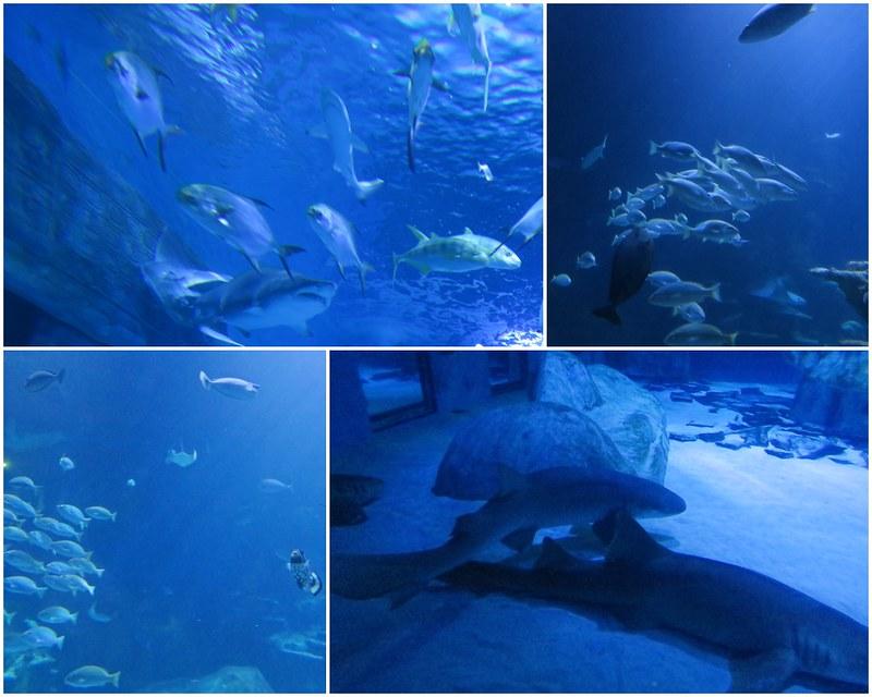 SEALIFELondon Aquarium-KLOOK客路-17docintaipei (11)