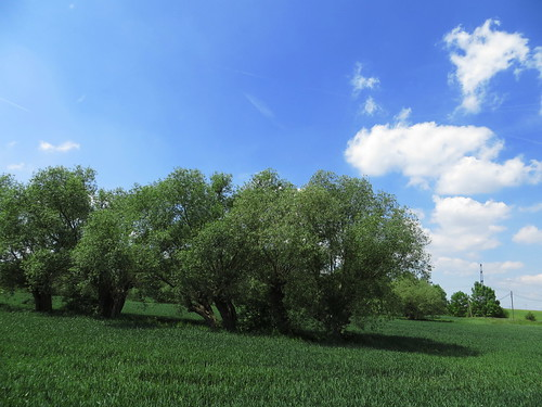 20170601 05 177 Regia Wolken Bäume Feld