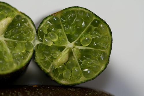 Microcitrus australasica - citron caviar  - Page 2 25444297057_c054d34720