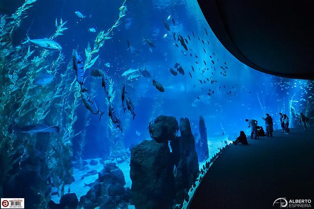 Big Blue Screen (Poema del Mar)