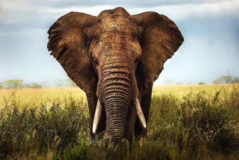 Les scientifiques cartographient l'ADN des éléphants passés et présents