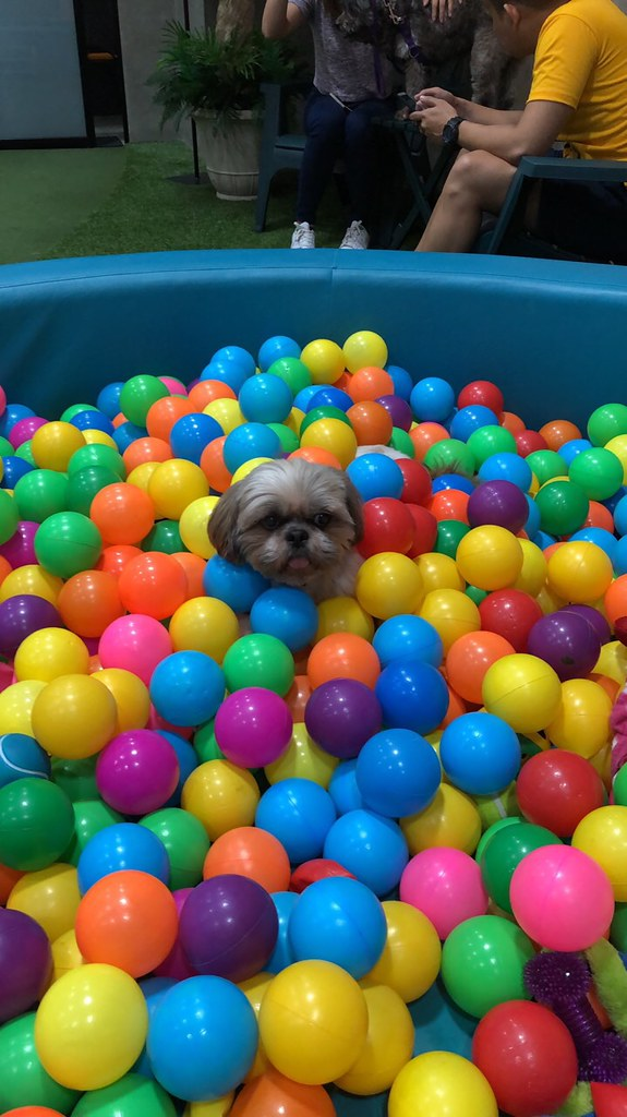 Tyler buried in colored balls