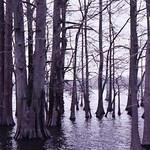 Cypress+Swamp.+Could+This+Be+In+The+Same+State+As+Chicago%3F