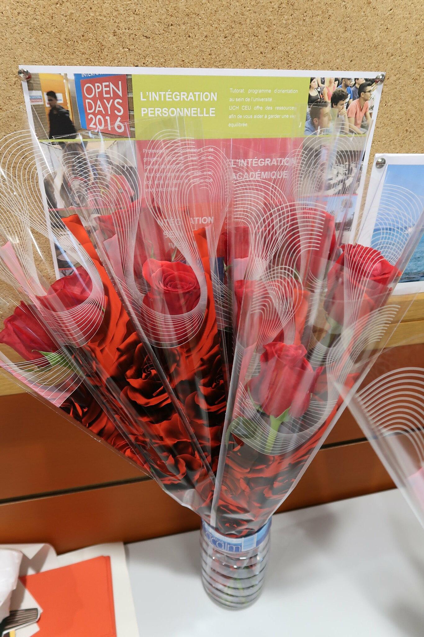 Rosa Solidaria de San Valentín