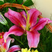 Flores by jagar41_ Juan Antonio