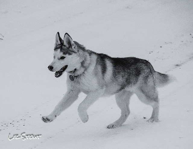 20180124 Dogs Playing_13