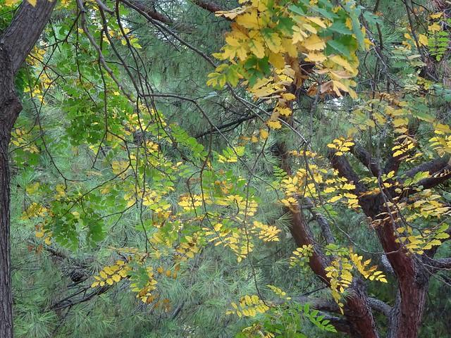 Mis fotos de ramas