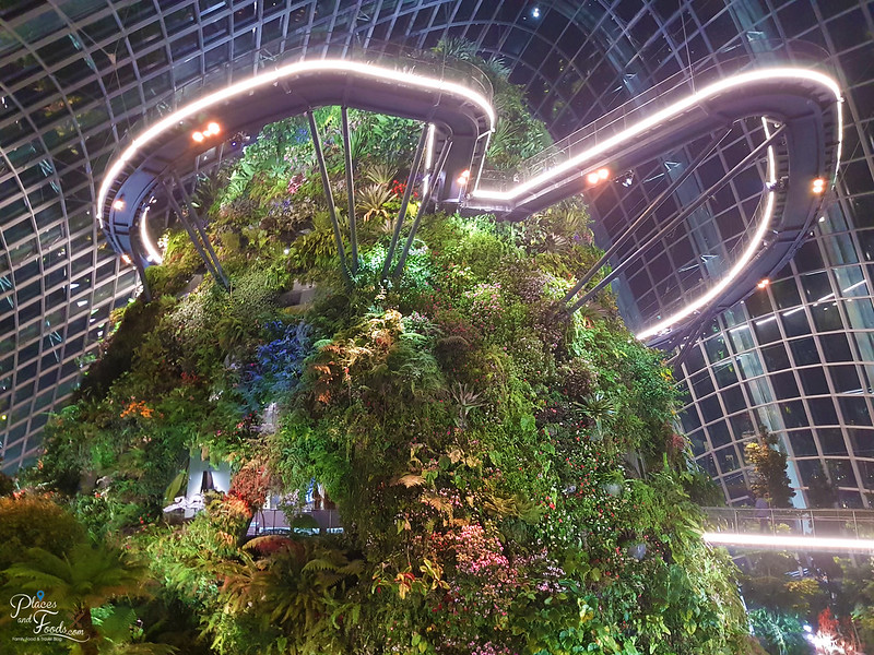 cloud forest night view