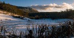 Bois du Jura