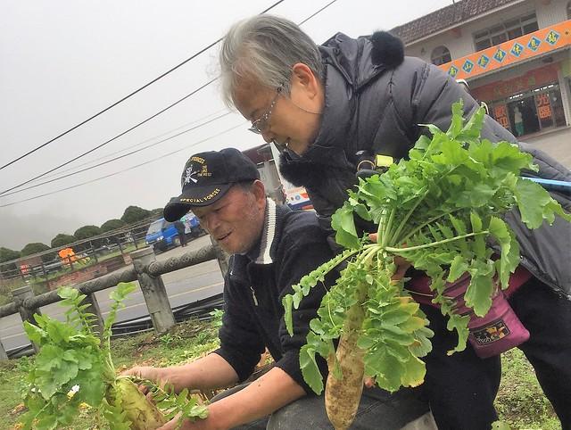 福山農場 高麗菜 (11)