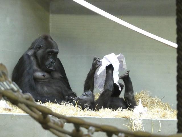 Tuana, Baby und Tonda, Wilhelma