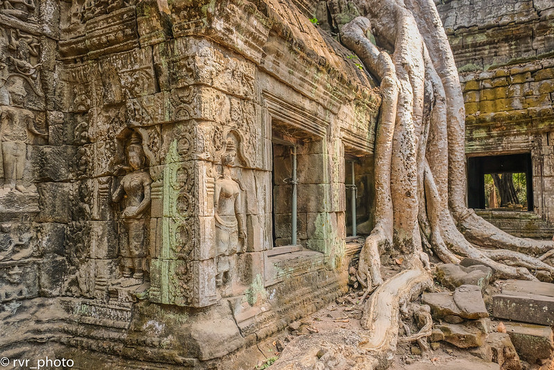 Ta Prohm Temple, Camboya