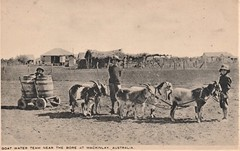 Goat water team near the bore at McKinlay/Mackinlay, Qld - very early 1900s