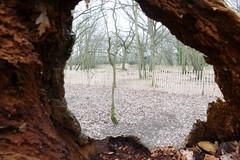 Streatham Common Framed