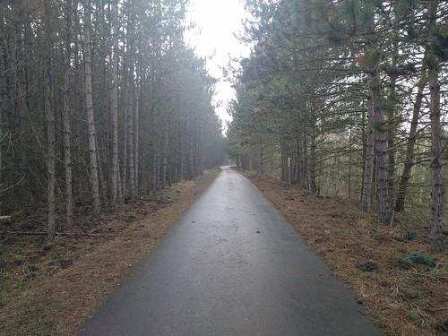 Wandern um den winterlichen Goitzschesee
