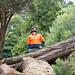 Tree_Risk_Assessment