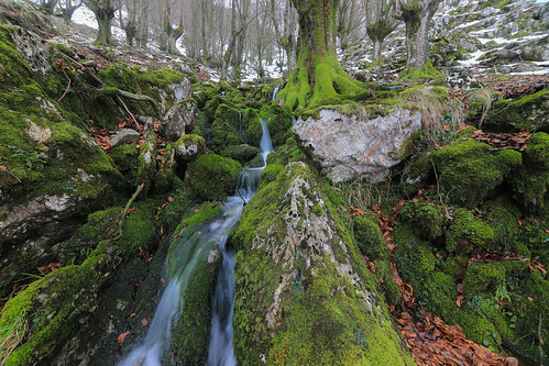 Parque Natural de Gorbeia #DePaseoConLarri #Flickr -56