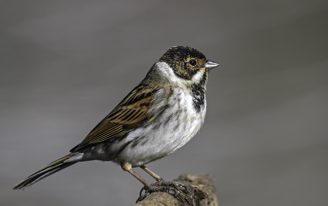 Mr Reed Bunting.