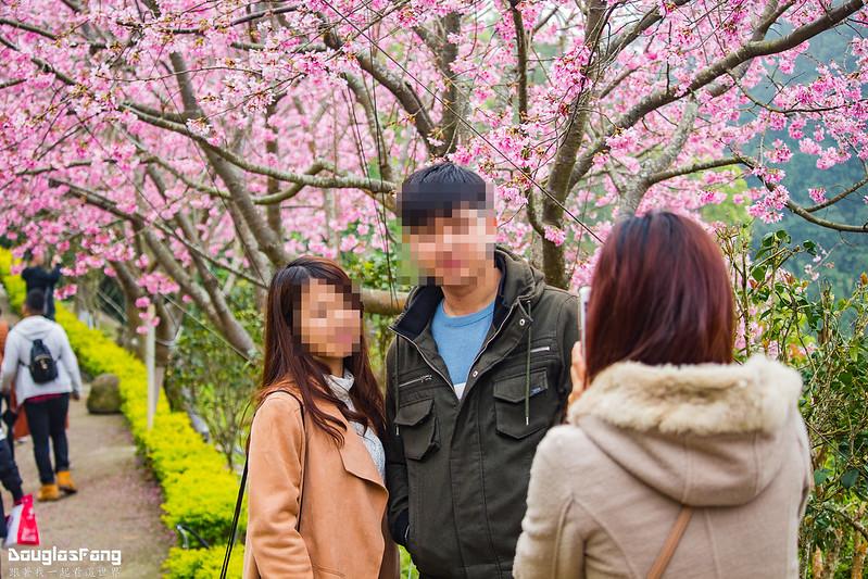 【遊記】苗栗獅潭蓮臺山妙音淨苑賞櫻秘境 (81-2)