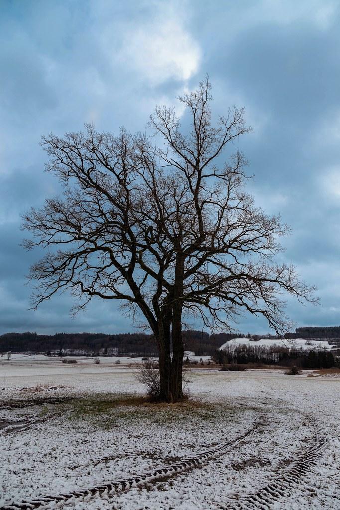 Winter Tree and Sky
