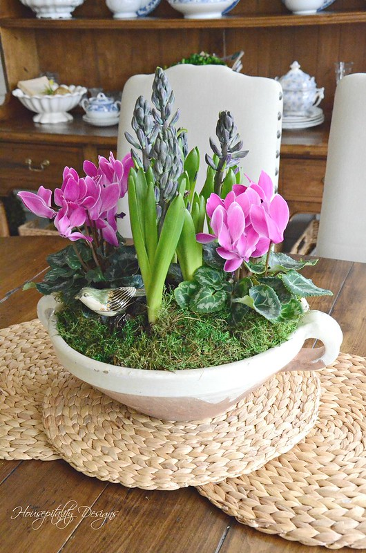 Dish Garden-Housepitality Designs