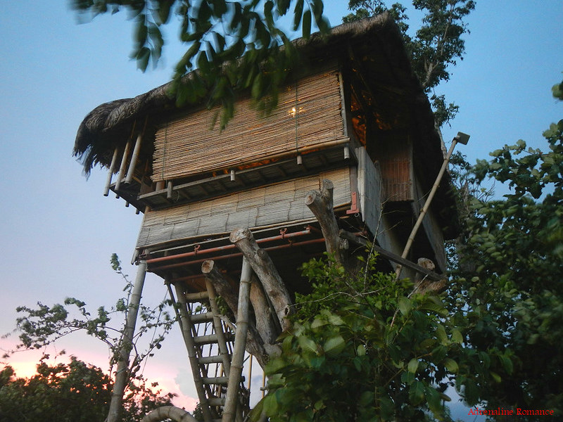 Kapusod Tree House