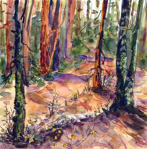 Sketchbook #111: Forest