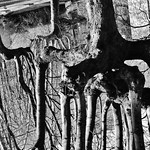Mangrove (evereve05)
