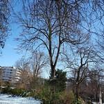 7 -  Le Parc de La Planchette sous la neige