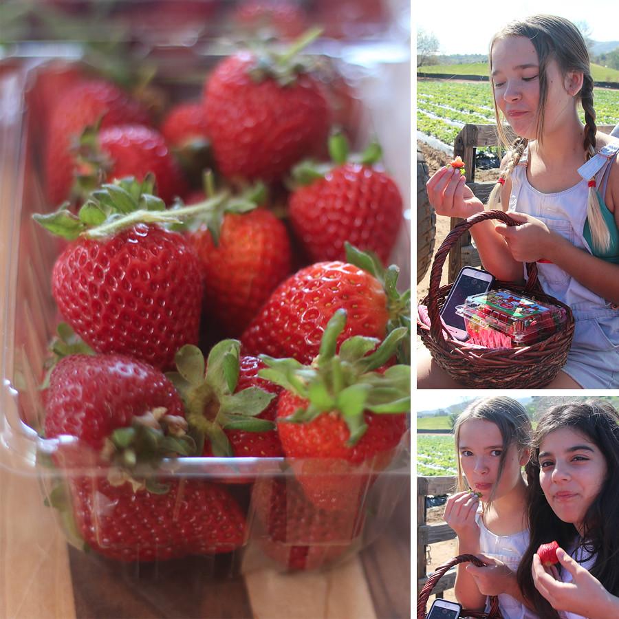 strawberry-season-1