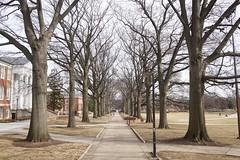 Walkway in January