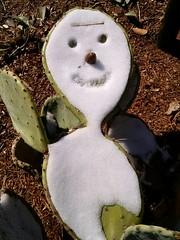 Snow man on prickly pear cactus pads, US National Arboretum