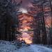 Pines Wood - Great Harwood