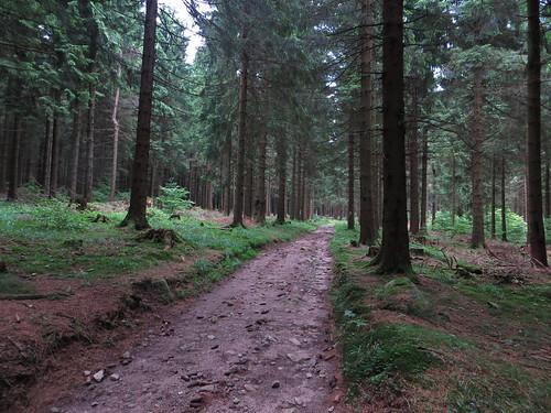 20170605 07 147 Regia Wald Weg