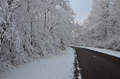Les bois de la Faye sous la neige - Photo of Cussey-les-Forges