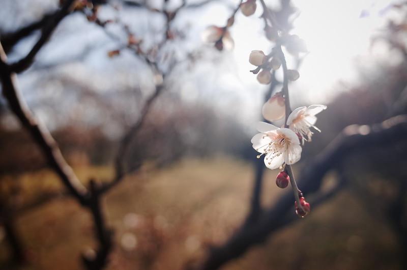 早春の兆し