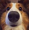 puppy03_mika