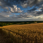 12. Juuli 2017 - 19:49 - Standing on the edge of the Cornfield on The Mount at Guildford as the sun sinks over the other side of the hill illuminating the fields of gold in the waning light.