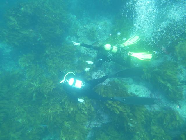 Some passing divers, Panasonic DMC-FT30